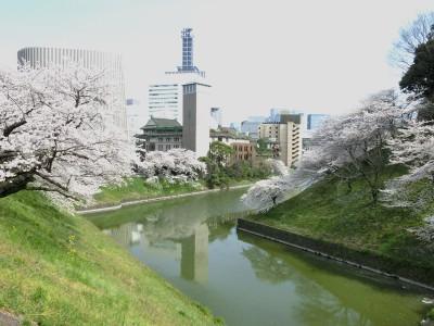 武道館前桜