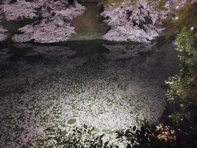 お堀の花びら2