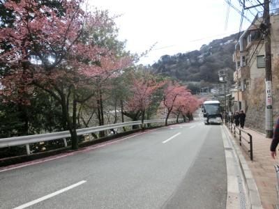 梅園への道