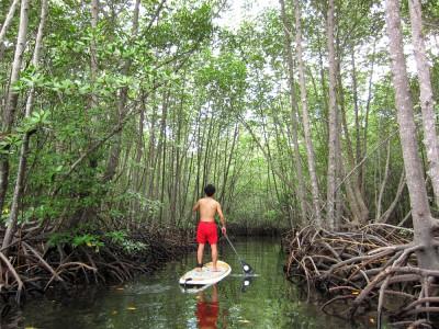 マングローブの森 SUP