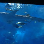 美ら海水族館7