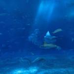 美ら海水族館10