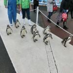 ペンギンと並走
