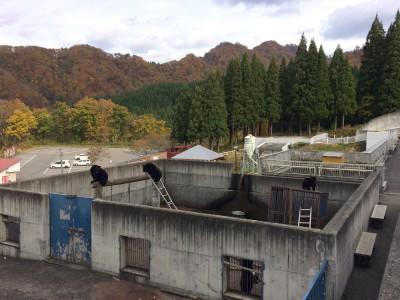 秋田 くまくま園